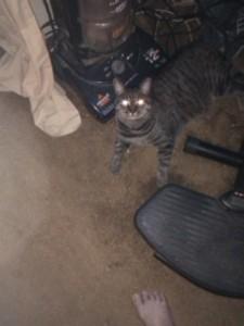 My alien cat Milo.. RIP
